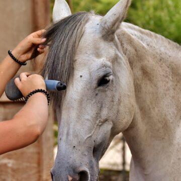 Ingrijire si igiena cai