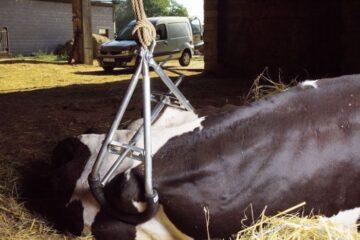 ridicator 2 bovine104453