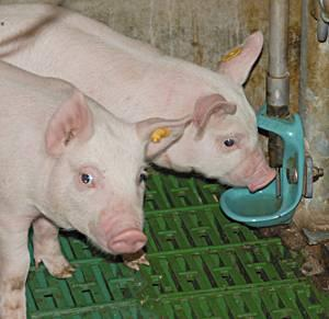 Adapatori pentru porci