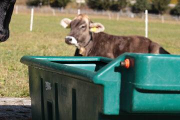 160.0103 WT200 - Ansicht auf dem Feld mit Rindern