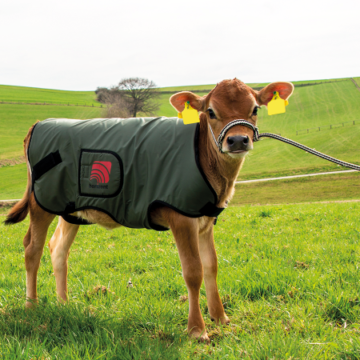 patura vitel
